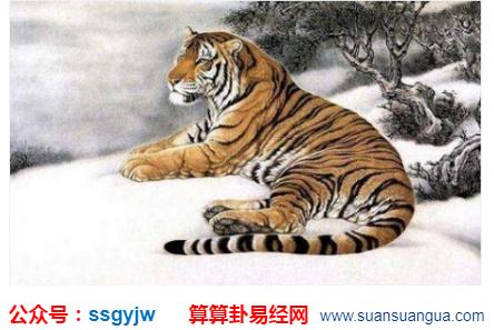 明年运势:1998年出生的属虎人2021年运气怎样?(图文)